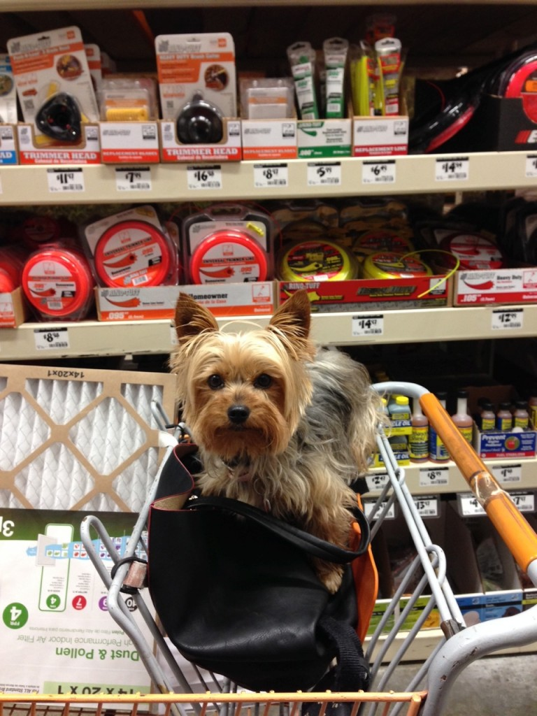 Phina at Home Depot